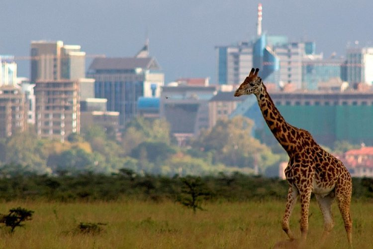 banner-nairobi-national-park-by-all-time-safaris